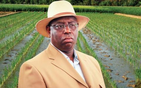 Autosuffisance en riz en 2017