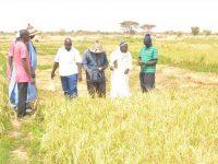 Visite du PRODAM dans les périmètres agricoles de Diowol