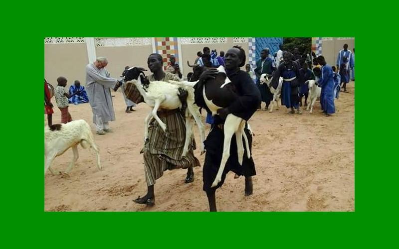 moutons-offerts-par-le-khalife-des-baye-fall